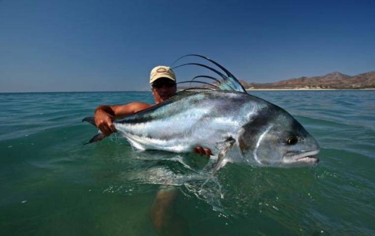 Baja flyfishing company baja flyfishing company for Flying fish company